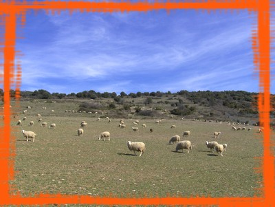 Les brebis au hameau de Sériès