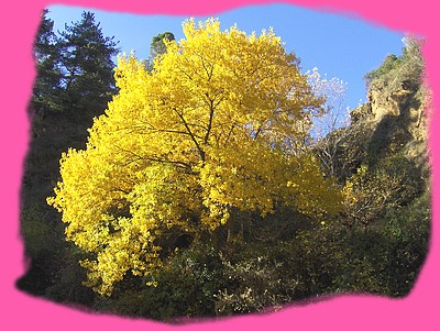 Un magnifique arbre au bas des châteaux